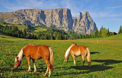 sciliar mountain,south tyrol Stock Image