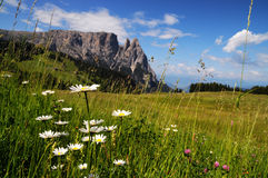 Sciliar from Seiser Alm Alpe di Siusi, Dolomites. Italy Stock Images