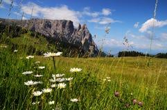 Sciliar von Seiser Alm Alpe di Siusi, Dolomit Italien Stockbilder