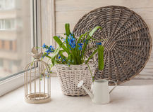 Scilla in  basket next watering can and decorative cage. Vintage decoration   with a decorative cage and scilla in  basket next watering can Stock Photos