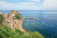 Scilla Stock Photography