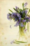 Scilla de fleur dans le vase, vintage Images libres de droits