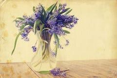 Scilla de fleur, vintage Images stock