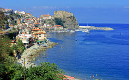 Scilla panorama Stock Photography
