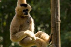 Scimmia! fotografia stock libera da diritti
