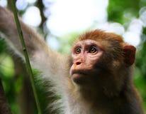 Scimmia Fotografia Stock Libera da Diritti