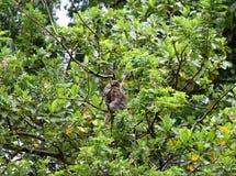 Scimmia 006 Fotografia Stock Libera da Diritti