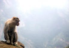 Scimmia ad un abisso, India Immagini Stock Libere da Diritti