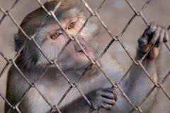 Scimmia al giardino zoologico Immagini Stock Libere da Diritti