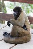 Scimmia al sole Fotografie Stock