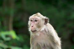 Scimmia alla provincia di Phetchaburi della caverna di Khao Luang immagini stock libere da diritti