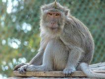Scimmia allo zoo fotografia stock