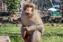 Scimmia in Angkor Wat, Cambogia Fotografie Stock Libere da Diritti