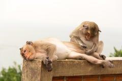 Scimmia animale che si siede sul pavimento di calcestruzzo Immagini Stock