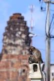 Scimmia in Attractionstemple in Tailandia Fotografia Stock Libera da Diritti