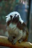 Scimmia Budapest Oceanarium Immagine Stock Libera da Diritti