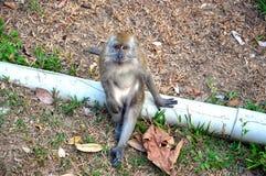 Scimmia che chiede di sedersi accanto lui immagine stock libera da diritti