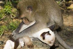 Scimmia che gioca con un gatto Immagini Stock Libere da Diritti