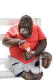Scimmia che mangia i chip immagine stock