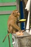 Scimmia che mangia nella via Fotografia Stock