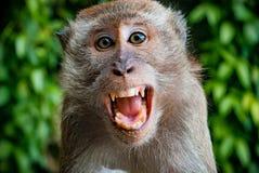 Scimmia che prende un selfie immagini stock