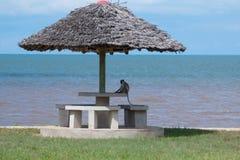 Scimmia che si rilassa sulla spiaggia fotografie stock