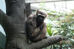 Scimmia che si siede su un albero immagini stock