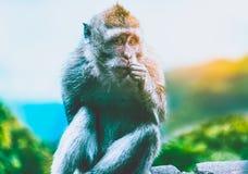 Scimmia che si siede su una filiale Fotografia Stock