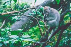 Scimmia che si siede su una filiale Immagini Stock Libere da Diritti