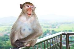 Scimmia che si siede su una rete fissa fotografie stock libere da diritti