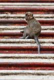 Scimmia che si siede sulle scale Fotografia Stock Libera da Diritti