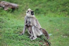 Scimmia con il bambino Fotografie Stock Libere da Diritti