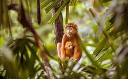 Scimmia con il bambino Immagini Stock