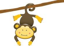 Scimmia d'attaccatura Immagini Stock
