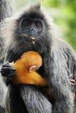 Scimmia del bambino e della madre Fotografia Stock Libera da Diritti