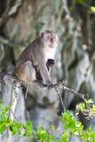 Scimmia del bambino e della mamma Fotografie Stock Libere da Diritti