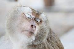 Scimmia del ritratto Immagini Stock Libere da Diritti