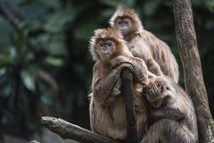 Scimmia dell'albero nella giungla Fotografia Stock
