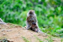 Scimmia della madre con il suo bambino fotografia stock