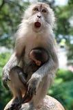 Scimmia della madre con la scimmia del bambino in braccia Immagine Stock