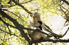 Scimmia della mamma con il suo bambino in sue braccia Immagini Stock Libere da Diritti