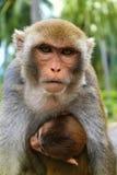 Scimmia della mamma con un bambino sull'isola della scimmia, Vietnam Immagini Stock