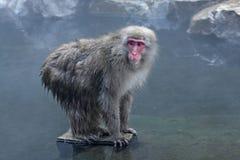 Scimmia della neve a Jigokudani Fotografie Stock Libere da Diritti
