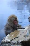 Scimmia della neve nel onsen Immagine Stock