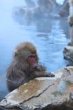 Scimmia della neve nel onsen Fotografie Stock Libere da Diritti