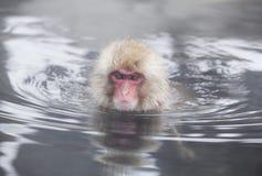Scimmia della neve in sorgenti di acqua calda di Nagano, Giappone Immagini Stock Libere da Diritti