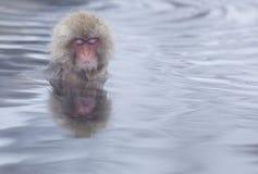 Scimmia della neve in sorgenti di acqua calda di Nagano, Giappone Fotografie Stock