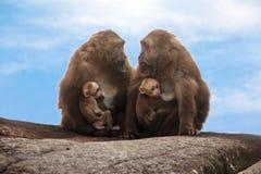 Scimmia di chiacchierata Immagine Stock Libera da Diritti