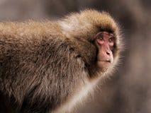 Scimmia di Onsen immagine stock libera da diritti