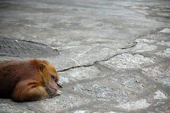 Scimmia di riposo fotografia stock